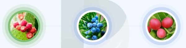 Germixil - quali ingredienti contengono le capsule?