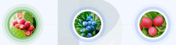 Reduslim - quali ingredienti sono contenuti nella formula della capsula?